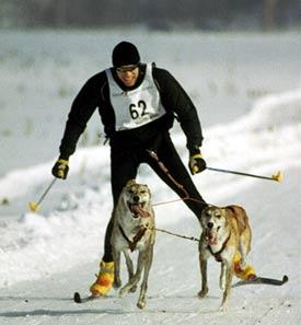 vermont skijoring