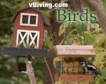 Vermont Birding